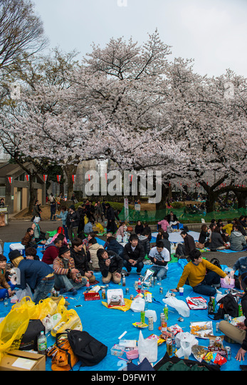 Picnic under the Cherry blossom in the Ueno Park, Tokyo, Japan - Stock Image