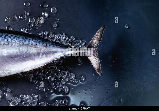 Raw fresh tuna fish - Stock Image