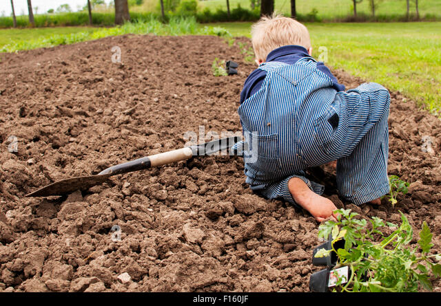 Boy working planting  tomatoes spring garden - Stock Image