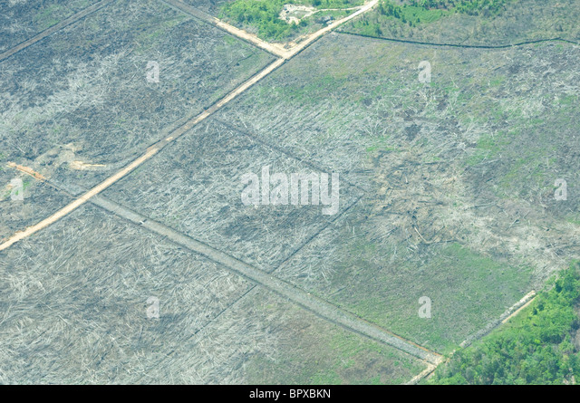 aerial photograph of recent deforestation in Tripa peat swamp, Aceh, Sumatra - Stock Image
