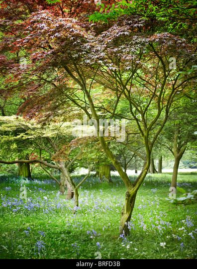 woodland view colorful leaves - Stock Image