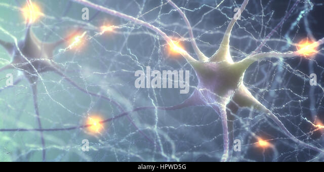 Nerve cells of the human brain, illustration. - Stock-Bilder