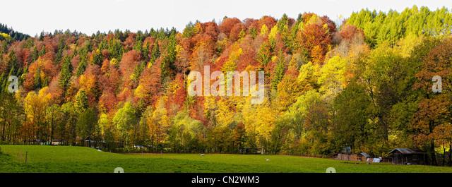 Forest scene, Bavaria, Germany - Stock-Bilder