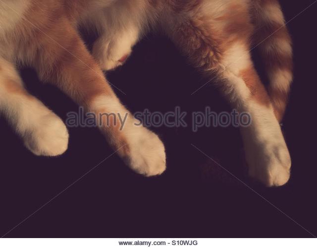 Cat's Legs & Tail Portrait - Stock Image