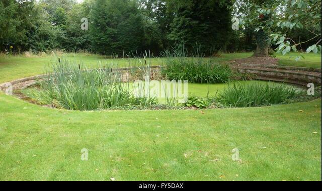 Ornamental pond and garden stock photos ornamental pond for Ornamental pond fish