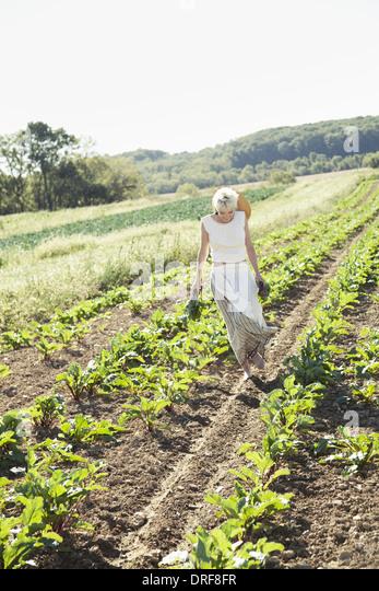 Maryland USA girl harvesting beets fresh vegetables - Stock Image