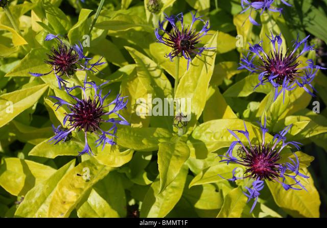 Gold Bullion Stock Photos Amp Gold Bullion Stock Images Alamy