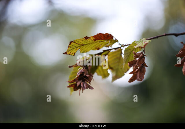 branches in autumn - Stock Image