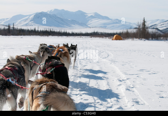 Musher's perspective while mushing on the North Fork of the Koyukuk River in Gates of the Arctic National Park - Stock Image