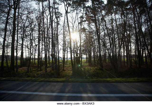 sun shining through autumn trees - Stock Image