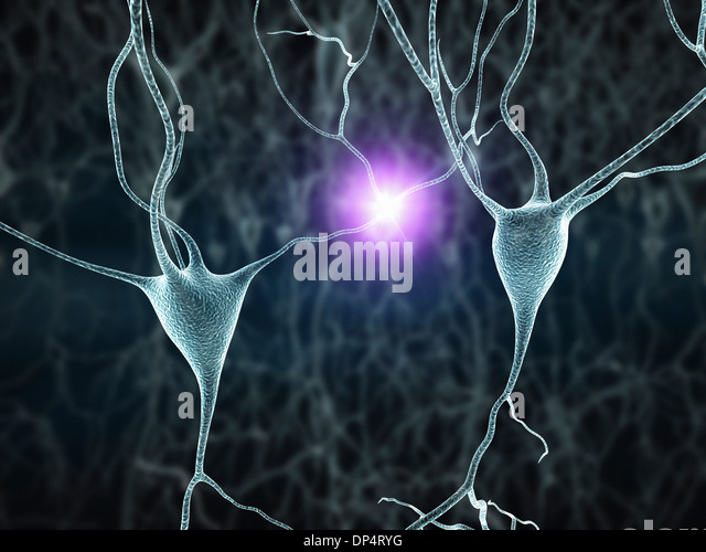 Nerve cells, artwork - Stock Image