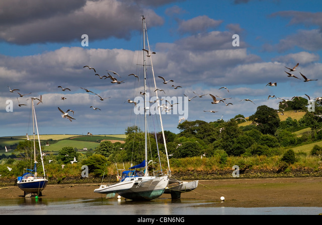 Gulls fly around beached boats on the mudflats of the River Avon, Devon, at low tide. - Stock Image