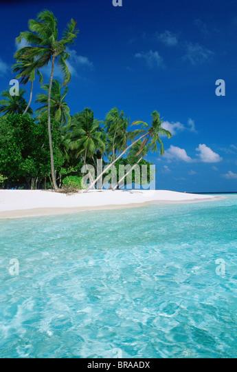 Shoreline Island Resort Kerala
