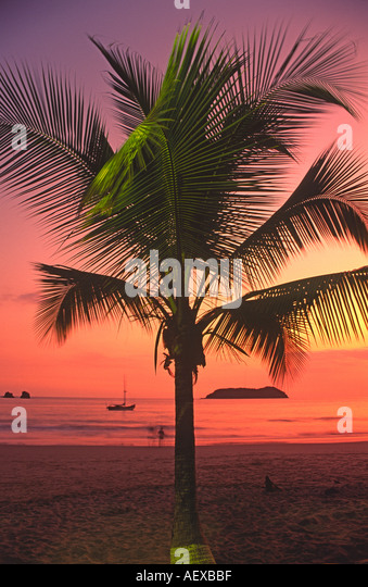 Costa Rica Manuel Antonio Nationalpark Palme Sunset  - Stock Image