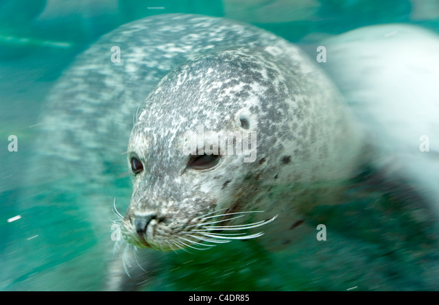 Rhyl Seaquarium Stock Photos & Rhyl Seaquarium Stock Images - Alamy