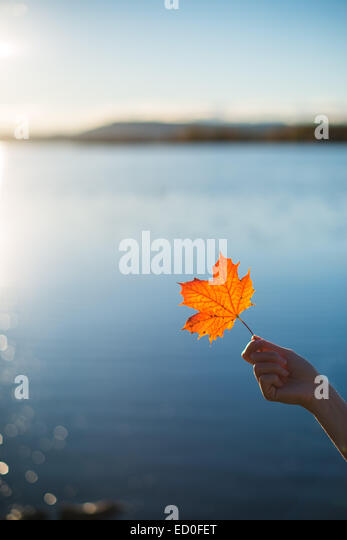 Norway, Oslo, Girl's hand holding maple leaf - Stock Image