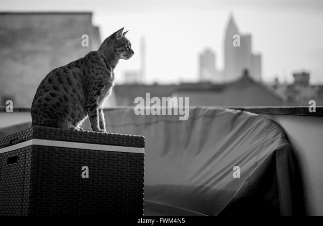 Cat Sitting On Container In City - Stock Image