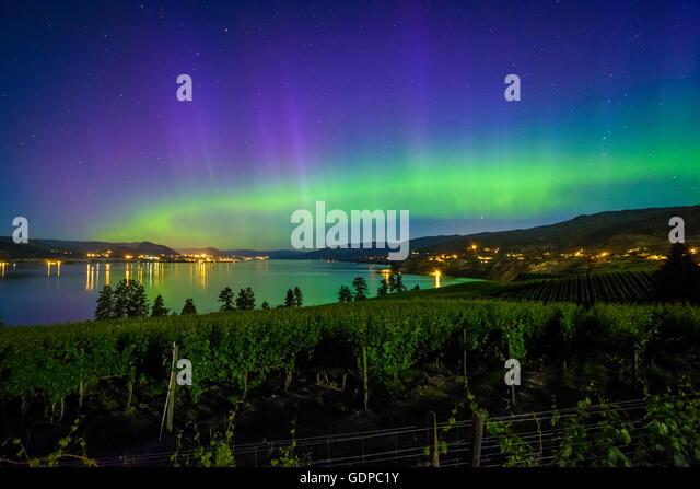 Aurora borealis over vineyards, Naramata, British Columbia, Canada - Stock Image