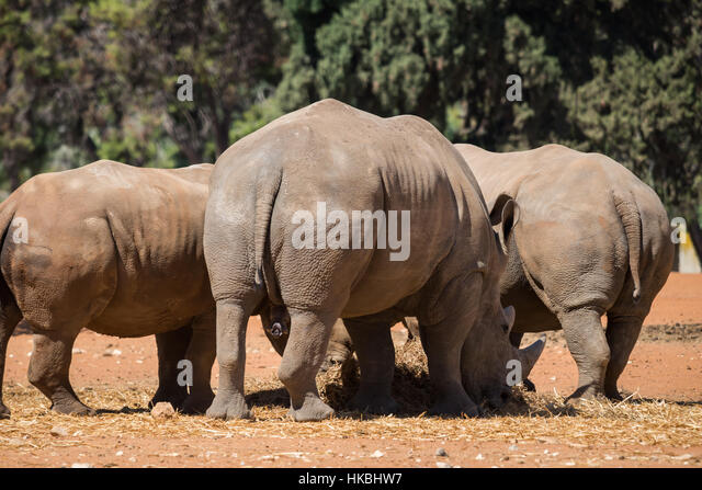 Visit to Safari Ramat Gan, Israel - Stock Image