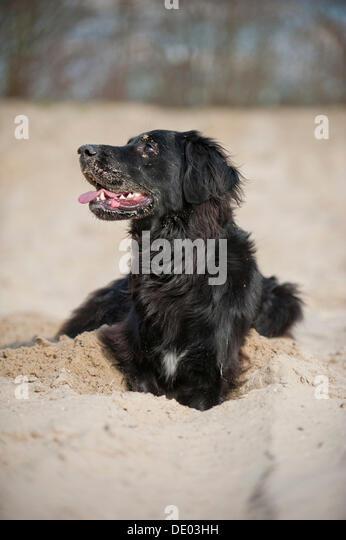 Dog Digging Hole At Park