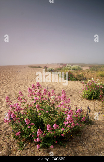 flowers on a sandy beach - Stock-Bilder