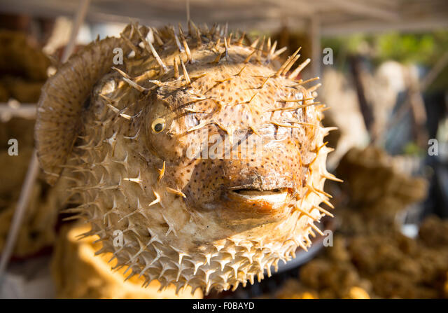 Ugly fish stock photos ugly fish stock images alamy for African rope fish