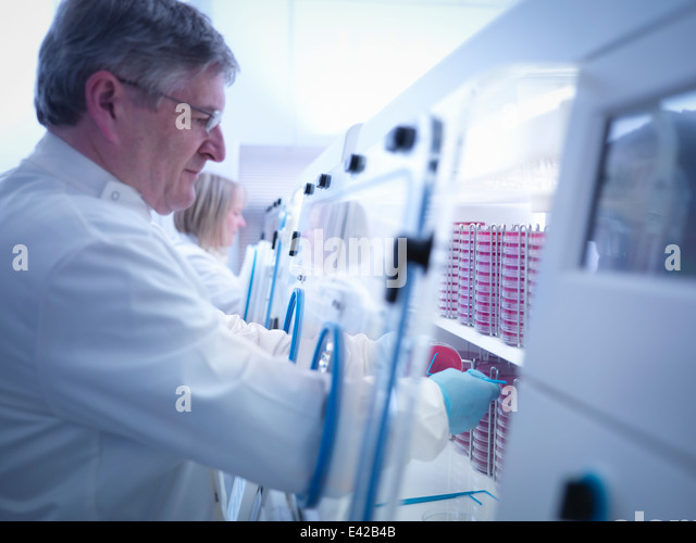 Scientist making bacterial culture in agar inside laboratory workstation - Stock-Bilder