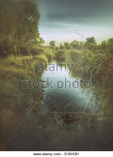a Creek' - Stock Image
