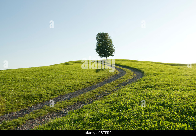 Germany, Bavaria, Allgäu, Single tree next to farm track - Stock Image