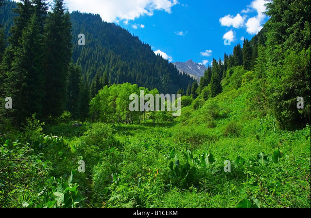 Mountain Gorge - Stock Image