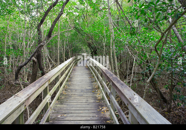 walkway through dense forest in Everglades National Park, Florida, USA - Stock-Bilder