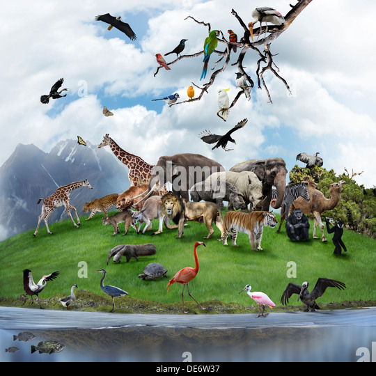 Nature Collage With Wild Animals And Birds - Stock Image