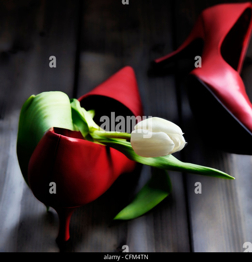 a tulip in a shoe - Stock Image