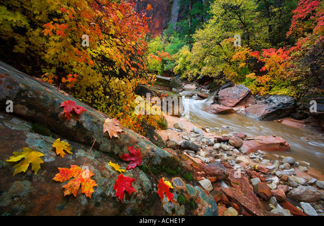 Zion Fall - Stock Image