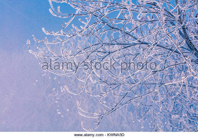winter-pattern-of-hoarfrost-hoar-frost-r