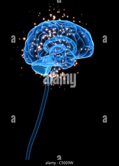 active brain - Stock Image