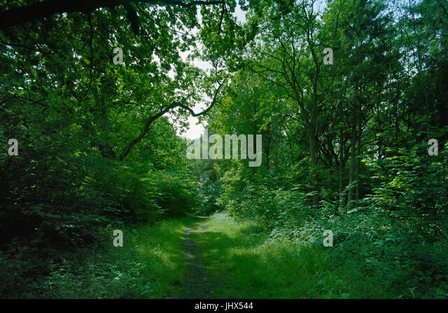 Path in Garmlingay Wood in Cambridgeshire - Stock Image