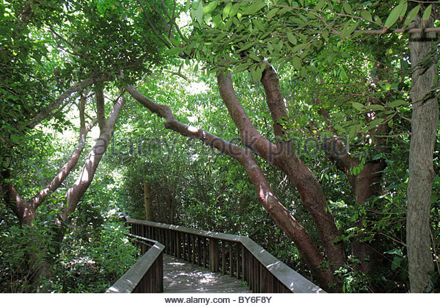 Boca Raton Florida Gumbo Limbo Environmental Complex and Nature Center nature trail raised boardwalk - Stock Image