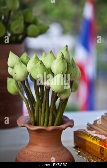 lotus flowers in a vase - Stock Image