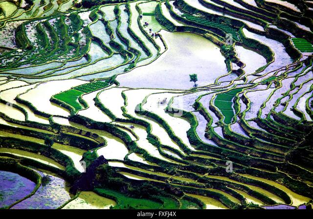 Honghe. 14th Apr, 2016. Photo taken on April 14, 2016 shows terraced fields in Baohua Township of Honghe County, - Stock Image