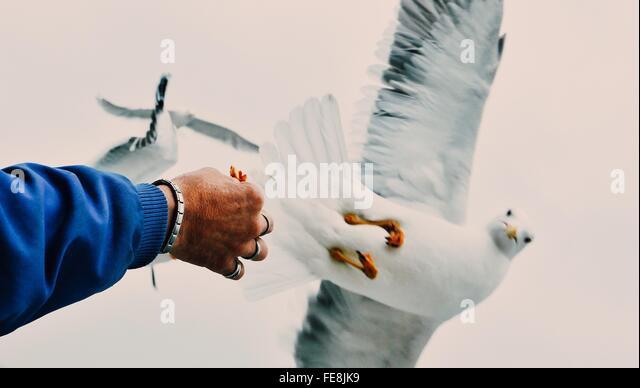 Close-Up Of Hand Feeding Bird - Stock Image
