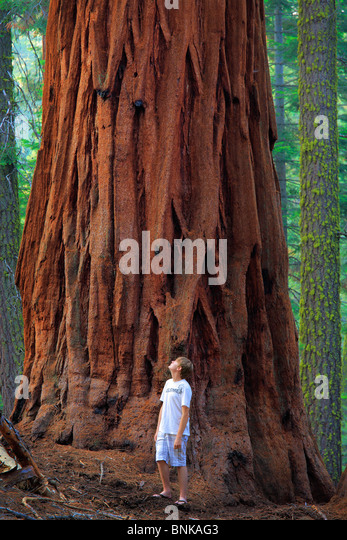 Young hiker and a giant Sequoia tree. Sequoia National Park, California. - Stock Image