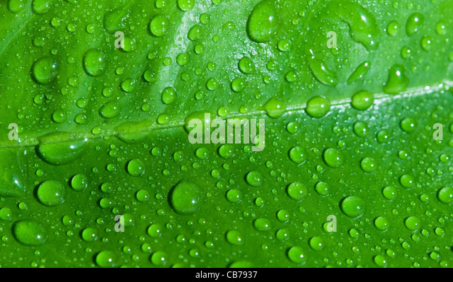 drops of water are on a leaf - Stock-Bilder