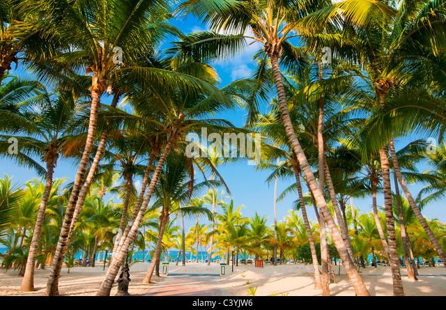 beach; Riu Palace; hotel; Punta Cana; Dominican Republic; Caribbean - Stock Image