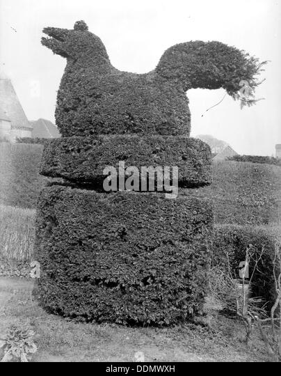 Sitting bird topiary at Sedlescombe, East Sussex, 1916. Artist: Nathaniel Lloyd - Stock Image