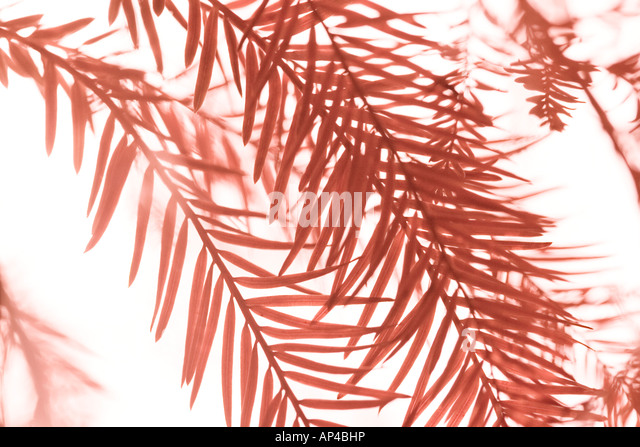 Abstract close up of autumn foliage on white background - Stock Image
