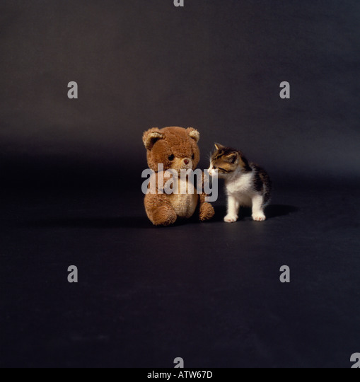 cat and teddy bear. Photo by Willy Matheisl - Stock Image