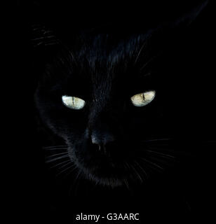 Close-up portrait of black cat with glowing eyes - Stock Image