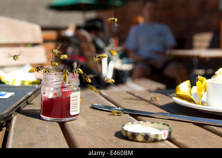 Wasps (Vespula vulgaris) swarming around jam pot at a cafe, Peak District, England, UK, August - Stock Image