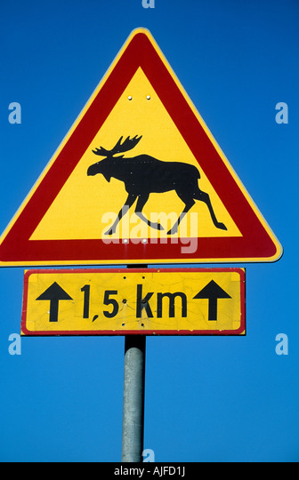 Moose on a road sign - Stock Image